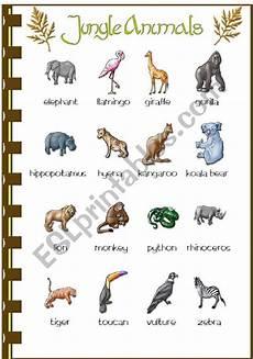 jungle animal worksheets 14319 jungle animals esl worksheet by vanda51