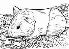 Malvorlagen Seite De Englisch Ausmalbilder Meerschweinchen Zum Ausdrucken