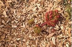Rhabarber Pflanzen 187 Alles Was Sie Wissen M 252 Ssen