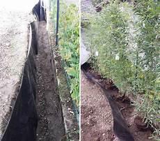 Installer Une Barri 232 Re Anti Rhizomes Pour Les Bambous