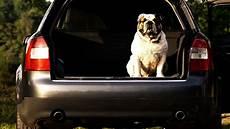 tierisch aufpassen transport tieren im auto