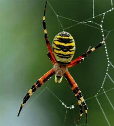 giftspinnen in deutschland do you recognise the uk s scariest spiders nature