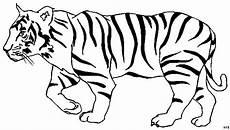 Ausmalbilder Tiere Tiger Laufender Tiger Ausmalbild Malvorlage Tiere