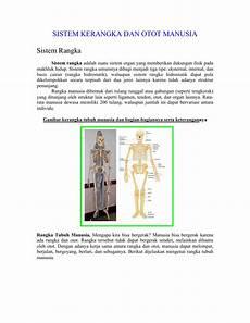 Gambar Kerangka Tubuh Manusia Dan Bagian Bagiannya