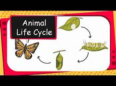 animal cycle worksheets 13938 science animal cycles