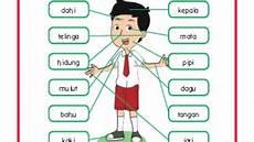 Contoh Rpp Kelas 1 Tema 1 Sub Tema 2 Pembelajaran 1