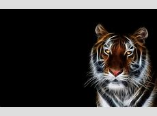 Cool Tiger Backgrounds   Wallpaper Cave