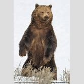 polar-bear-drawing-for-kids