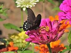 Schmetterling Blume Kostenlose Bilder Auf Pixabay