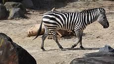 am zoo membership levels the maryland zoo