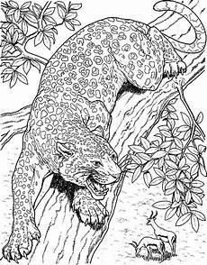 jacksonville jaguars coloring pages learny