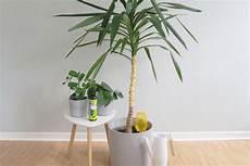 pflanzen während urlaub bewässern tipps tricks zur bew 228 sserung deiner pflanzen im urlaub
