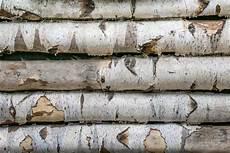Vorteile Und Nachteile Birkenholz 183 Ratgeber Haus Garten