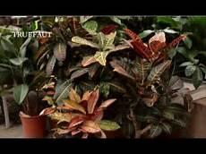 le pour plante 18550 quel emplacement choisir pour une plante d int 233 rieur jardinerie truffaut tv