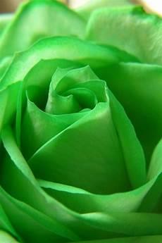 green flower iphone wallpaper hd green roses green wallpaper for iphone hd