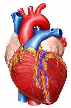 Jantung Adalah Panglima Bukti Ilmiah Jantung