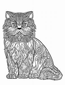 cat free to color for wise cat of details
