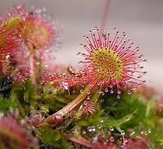 Fleischfressende Pflanzen Pflege Kennt Sich Jemand Damit