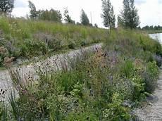 pflanzen für trockene schattige standorte mit heimischen stauden gestalten gartenzauber