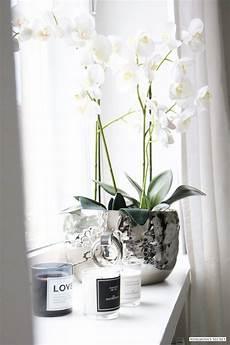 pflanzen deko wohnzimmer naimabarcelona adalmina s secret fensterbank deko