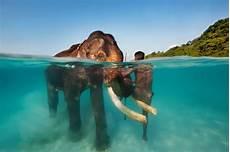 21 Photos Aquatiques Incroyables Prises 224 Moiti 233 Sous L