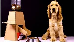 DIY Puppy Dog Food Dispenser With Cardboard  YouTube