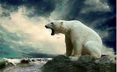 polar backgrounds amazing polar wallpaper pc desktop images background