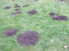 comment se debarasser des taupes les taupes et comment s en d 233 barasser les jardins