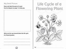 plants worksheets grade 3 13550 10 ready to go resources for teaching cycles scholastic