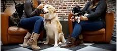 bar a chien lille le waf le premier caf 233 chiens d europe a un an