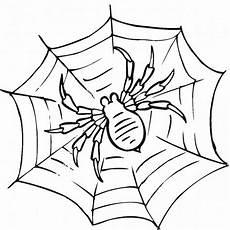 Ausmalbilder Malvorlagen Spinnen Spinnennetz Mit Spinne Malvorlage Einzigartig Spinne