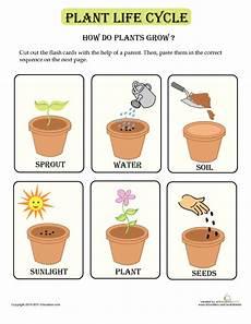 how plants grow lesson plan education com