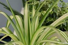 Pflanzen Wenig Licht - best indoor plants low light low light houseplants