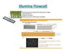 flow cell illumina ngs data formats and analyses