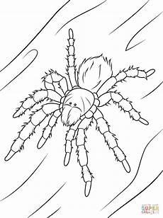 Malvorlagen Wolf Spider Chilean Tarantula Coloring Page Free Printable