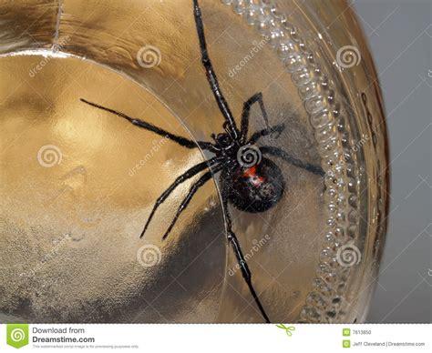 Black Widow Belly Button
