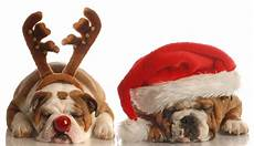 cute holiday dog pictures pinterest christmas puppy christmas dog and merry christmas