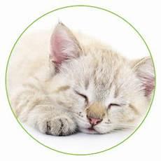 pflegeleichte haustiere zum kuscheln ein haustier zum kuscheln katzen welche katze passt zu