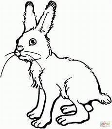 Malvorlagen Hasen Kaninchen Kaninchen Zum Ausmalen Kinderbilder