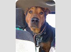 Houdini   Adopted Dog   Guelph, ON   Doberman Pinscher