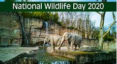 wildlife topics national wildlife day 2020 date and significance know all about the obsrrvance that creates