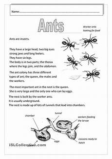 grade 3 science worksheets insects 12532 pin by alleyce pang on science ants worksheet ants science ants