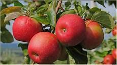 Gambar Apel Merah Fruit Apple Images Hd 1600x900