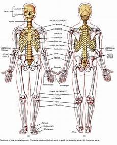 Anatomi Ii Nama Nama Bagian Tubuh Manusia Yvc I Gc 012
