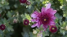 blume lila lila blume foto bild makro natur blume bilder auf
