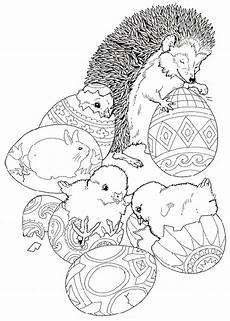 ausmalbild tiere igel ausmalbilder1001 de