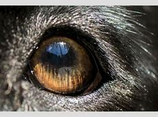 Are Dogs Color Blind? ? American Kennel Club