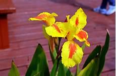 iris fiore immagini iris fiore immagine gratis domain pictures