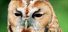 Gambar Paruh Burung Trend Burung