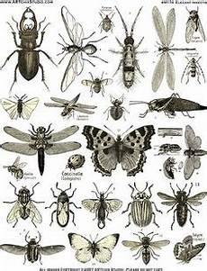 Malvorlagen Insekten Um Die 37 Besten Bilder Zu K 228 Fer Insekten K 228 Fer Insekt